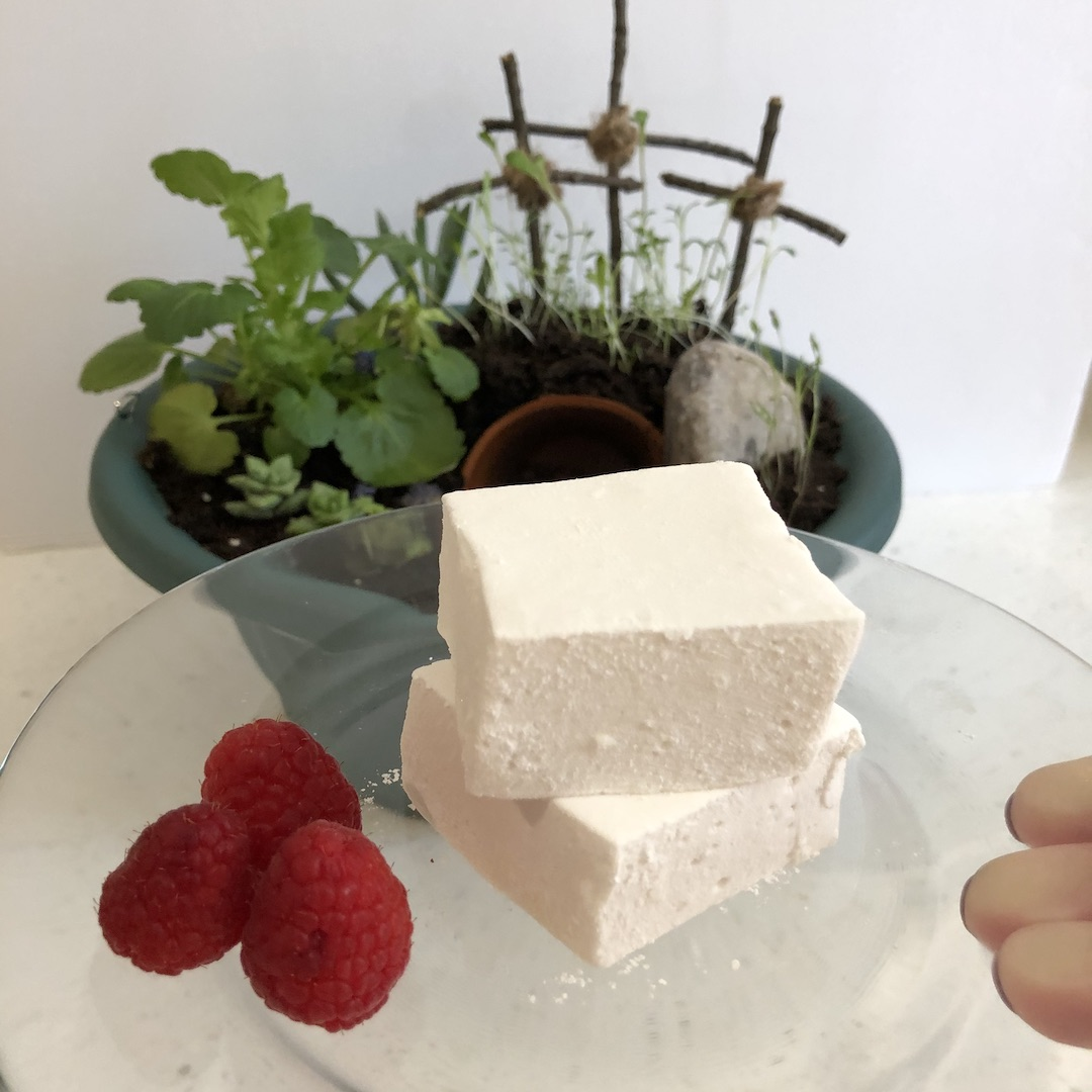 two marshmallow on a clear plate with three raspberries in front of an Easter dish garden